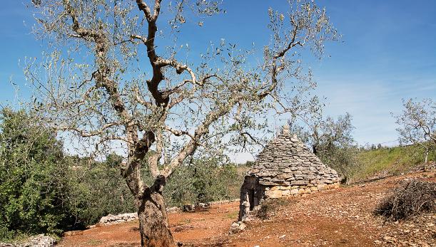 ovadia Puglia sito